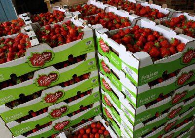 cretes-fraises